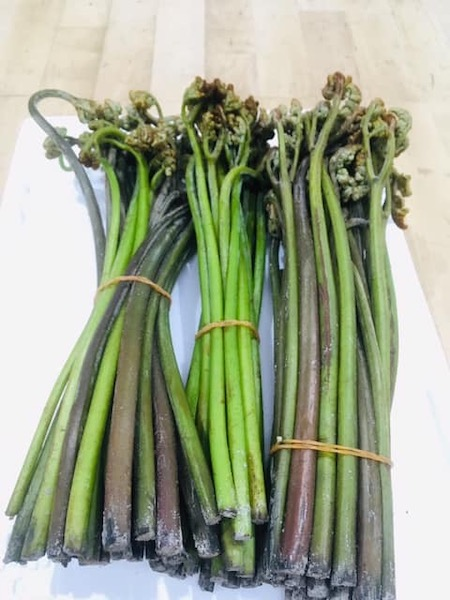 ワラビ(蕨/わらび)は全国に自生しているシダの仲間の一種で、若芽を山菜として食用にします。また、ワラビ(蕨/わらび)の根には澱粉が多く含まれており、この
